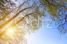 Qdiz Stock Photos Tree Branches and Bright Sun,  #against #autumn #background #bare #blue #branch #bright #design #environment #fall #landscape #leaf #leaves #light #nature #outdoor #Silhouette #sky #Sun #sunlight #sunny #tree #trunk