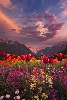 Tulip Valley by Erik Sanders ~ Interlaken, Switzerland. Gorgeous Tulips and a beautiful sky. Mother Nature sure knows how to call attention to herself. Beautiful World, Beautiful Places, Beautiful Sunset, Beautiful Scenery, Beautiful Eyes, Amazing Places, Landscape Photography, Nature Photography, Amazing Photography