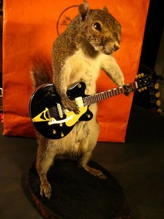 Rock and Roll squirrel via The Taxidermist.