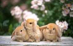 http://4.bp.blogspot.com/-Qf-Osu2fSy0/UOgiex7XytI/AAAAAAAAAJM/KFm_awjfWpc/s1600/fondos_de_animales_hd_20120119_2025474651.jpg