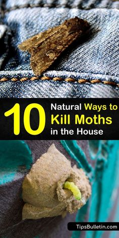 Sachets work well to deter adult moths including pantry moths but dont work on moth larvae. We show you various pest control methods that control and prevent future moth infestations in the house by killing moth eggs. Cleaning Checklist, Cleaning Hacks, Moths In House, Getting Rid Of Moths, Pantry Moths, Cedar Chips, Arm And Hammer Super Washing Soda, Moth Repellent, Clean Your Washing Machine