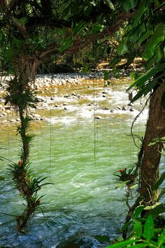 Selva Verde Costa Rica Rainforest Lodge