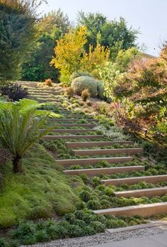 long stone steps act as retainer in a natural garden, Landscape Design by Kirkpatrick Architects