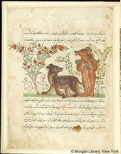 Bestiary, MS M.500 fol. 24r - Images from Medieval and Renaissance Manuscripts - The Morgan Library & Museum