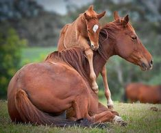momma and baby animal photography