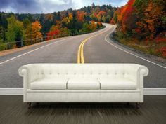 Fall scenic highway Wall Mural   #eazywallz