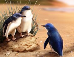 Little Penguins by pamelap