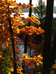 Fall Colors at Amigo