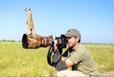 Suricato pega 'carona' na lente de fotógrafo para observar paisagem Animals And Pets, Baby Animals, Funny Animals, Cute Animals, Wild Animals, Funny Cats, Nature Animals, Wildlife Photography, Animal Photography