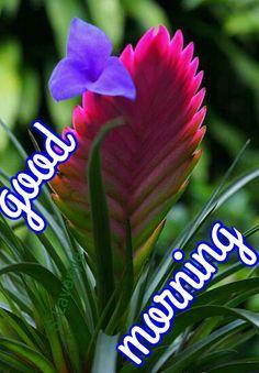 Good morning S.Lavanya Good Morning Coffee Gif, Cute Good Morning Images, Latest Good Morning Images, Good Morning My Friend, Good Morning Post, Good Morning Flowers, Morning Msg, Good Morning Greetings, Good Morning Wishes
