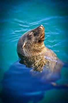 Go on a little boat cruise tin Hout Bay o see the seals - BelAfrique your personal travel planner - www.BelAfrique.com