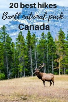 The clean alpine air, the smell of the pine trees and mountain views all around you. Hike one of the Best Hikes in Banff National Park, the popular Canadian.   best hikes in Banff national park   Banff hikes   hiking in Canada   Canadian Rockies   what to do in Banff   best things to do in Banff national park #banffhiking