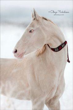 Cute Horses, Pretty Horses, Horse Love, Most Beautiful Horses, Animals Beautiful, Animals And Pets, Cute Animals, Akhal Teke Horses, Horse Anatomy