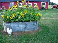 shut the front door.a stock tank full of sunflowers!anyone have an empty stock tank handy? Pig feeder in garden. Outdoor Gardens, Container Gardening, Flower Beds, Yard, Country Gardening, Plants, Backyard Garden, Backyard, Front Yard