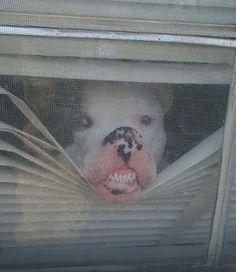 Zwierzaki czekają na swoich właścicieli. Zabawne zdjęcia - Kobieta