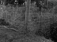 Secret garden 6 / 6.