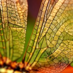 Dragonfly wings. .. as i have said before some of the most beautiful  body  is inspired by nature and it's details