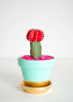 Un simple cactus pour apporter de la couleur