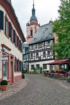 Eltville am Rhein - There is a beautiful and well known rose garden in Eltville, which is situated directly on the banks of the Rhine River.