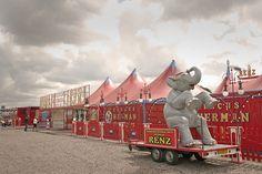 #circus #elephant
