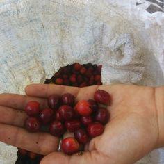 cherries at queseria