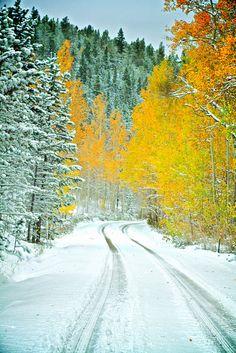 Autumn Snow - Colora