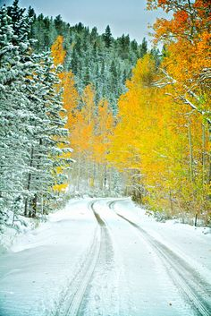 Autumn Snow - Colora