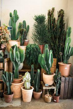 Indoor Cactus Garden, Cactus House Plants, House Plants Decor, Cactus Decor, Plant Decor, Cacti And Succulents, Planting Succulents, Planting Flowers, Backyards