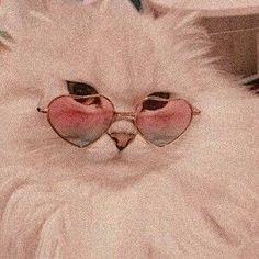 H cats pets cute – Wallpaper Cat Aesthetic, Aesthetic Collage, Aesthetic Vintage, Angel Aesthetic, Aesthetic Clothes, Photo Wall Collage, Aesthetic Pictures, Dog Love, Cute Cats