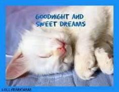 AmO Images, Photos of little kittens Good Night Cat, Good Night Prayer, Good Night Friends, Good Night Sweet Dreams, Cute Little Kittens, Kittens Cutest, Cats And Kittens, Image Chat, Good Night Greetings