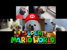 Gabe The Dog + Doug the Pug Doug The Pug, Super Mario World, Cute Little Animals, Pugs, Funny Pictures, Youtube, Videos, Fanny Pics, Funny Pics