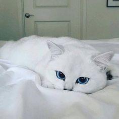 Beautiful eyes!❤❤