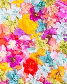 Blossoming // Violet Tinder Studios