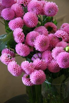 Dalie - My site Flowers Nature, Exotic Flowers, Amazing Flowers, Pink Flowers, Beautiful Flowers, Beautiful Beautiful, Dahlia Flower, My Flower, Bloom