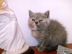 gatinhos prontos a sair em Leiria