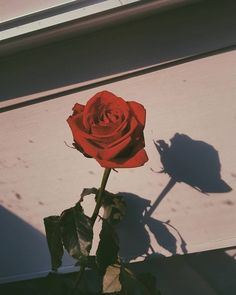 The post appeared first on Fotowand ideen. The post appeared first on Fotowand ideen. Tumblr Wallpaper, Flower Wallpaper, Screen Wallpaper, Wallpaper Backgrounds, Flower Aesthetic, Red Aesthetic, Aesthetic Pictures, Aesthetic Iphone Wallpaper, Aesthetic Wallpapers