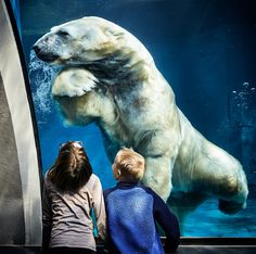 10 Best Zoos To Visit With Your Kids In Europe - Save A Train