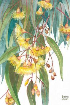 Australian Wildflowers, Australian Native Flowers, Australian Art, Watercolor Print, Watercolor Flowers, Watercolor Paintings, Art Aquarelle, My Art Studio, Leaf Art