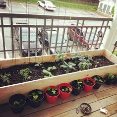 Diy balcony raised garden