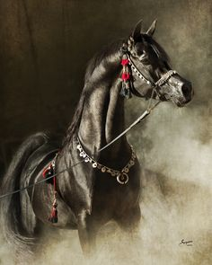 Bellagio RCA (Alixir x Rhapsody In Black)   2003 black SE stallion bred by Rock Creek Arabians, Texas