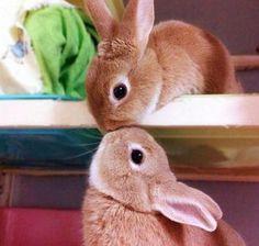 bunny kiss!