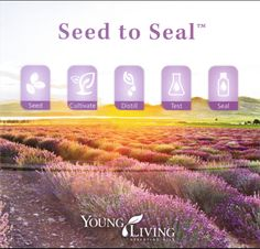 Young Living Essential Oils Distributor #1864507 sacredlivingessentialoils@yahoo.com