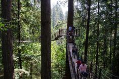 Capilano Suspension Bridge Park | 48 Hours in Vancouver