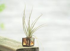 Mini Air Plant Holder Brown Beveled Stained Glass Terrarium Cubed Glass Box Planter