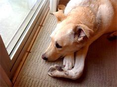 My dog Casey. Ruth, Tucson, AZ - 8/12/2015