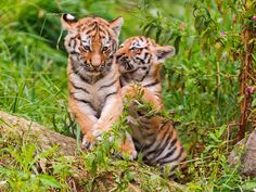 All sizes | Playing in the grass II | Flickr - Photo Sharing!