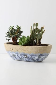 Green Thumbs Up: Stylish Pots and Planters Para el hogar Cactus news Succulents In Containers, Cacti And Succulents, Herb Pots, Garden Pots, Dish Garden, Succulent Bonsai, Cactus Flower, Houseplants, Container Gardening