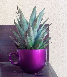 This is how you can use the pineapple waste, Take a pineapple, cut the top, and wash it, then take a jumbo sized mug and you can decorate the mug with paints and so on, #creativity #homeimprovement.
