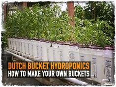 Hydroponic Gardening Ideas Dutch Bucket Hydroponics: How to Make Your Own Buckets Hydroponic Farming, Hydroponic Growing, Hydroponics System, Hydroponic Gardening, Growing Plants, Gardening Tips, Backyard Aquaponics, Aquaponics Kit, Indoor Vegetable Gardening