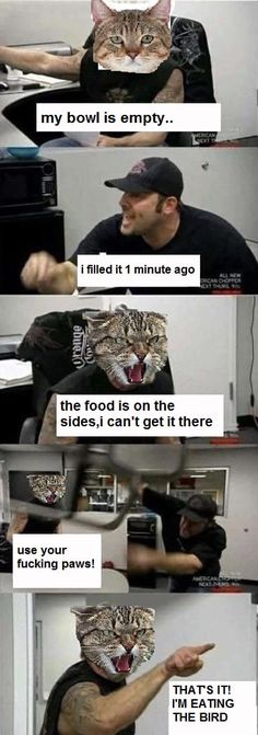 Cat owners can relate..